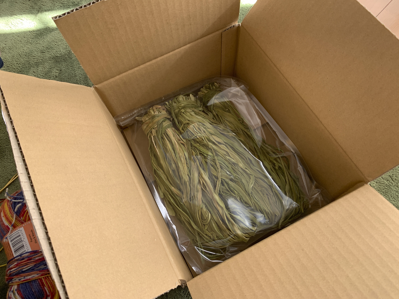 Amazonから届いた山クラゲ